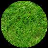 grass-4